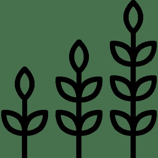 crescita-processo-avvio-startup